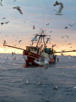 Reseach programs for Elias v fishing